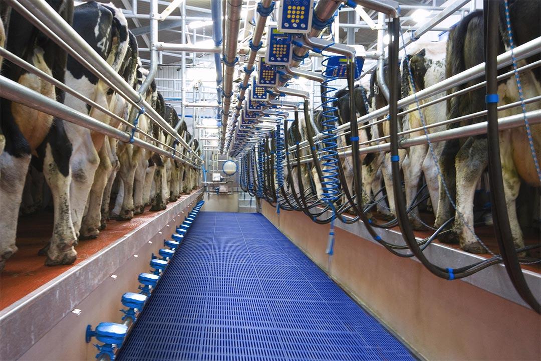 Dojáreň Swiftflo Dairymaster Swing-Over