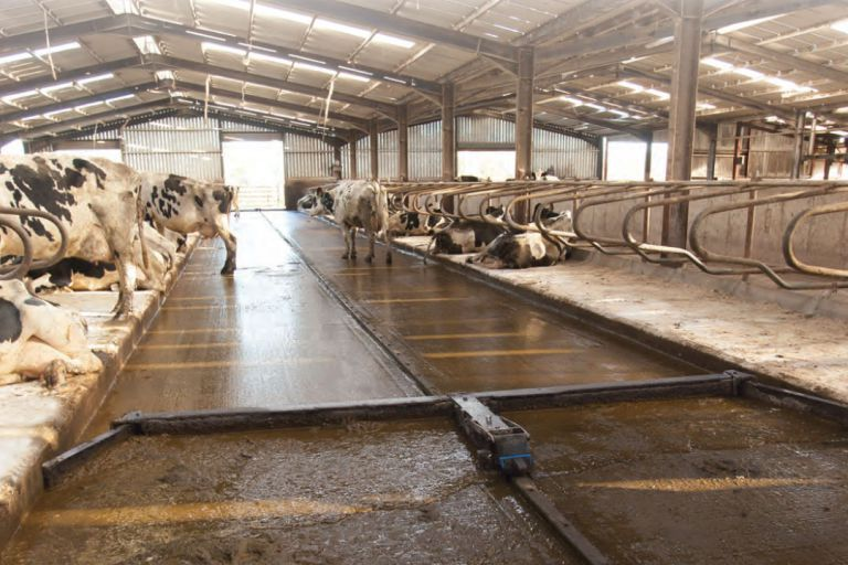 Dairymaster CleanSweep